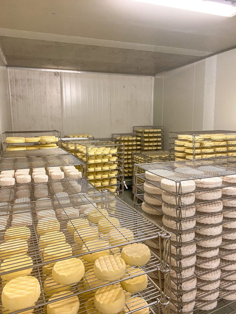 Blog A Day In The Life Of A Cheese Maker04